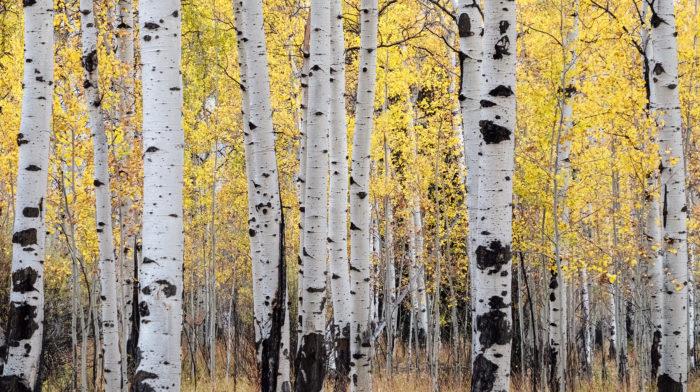 DrewAveling_AAA_Wyoming